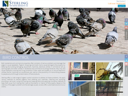 Sterling Pest Control Services Pvt. Ltd., Mumbai, (India) - Bird Control